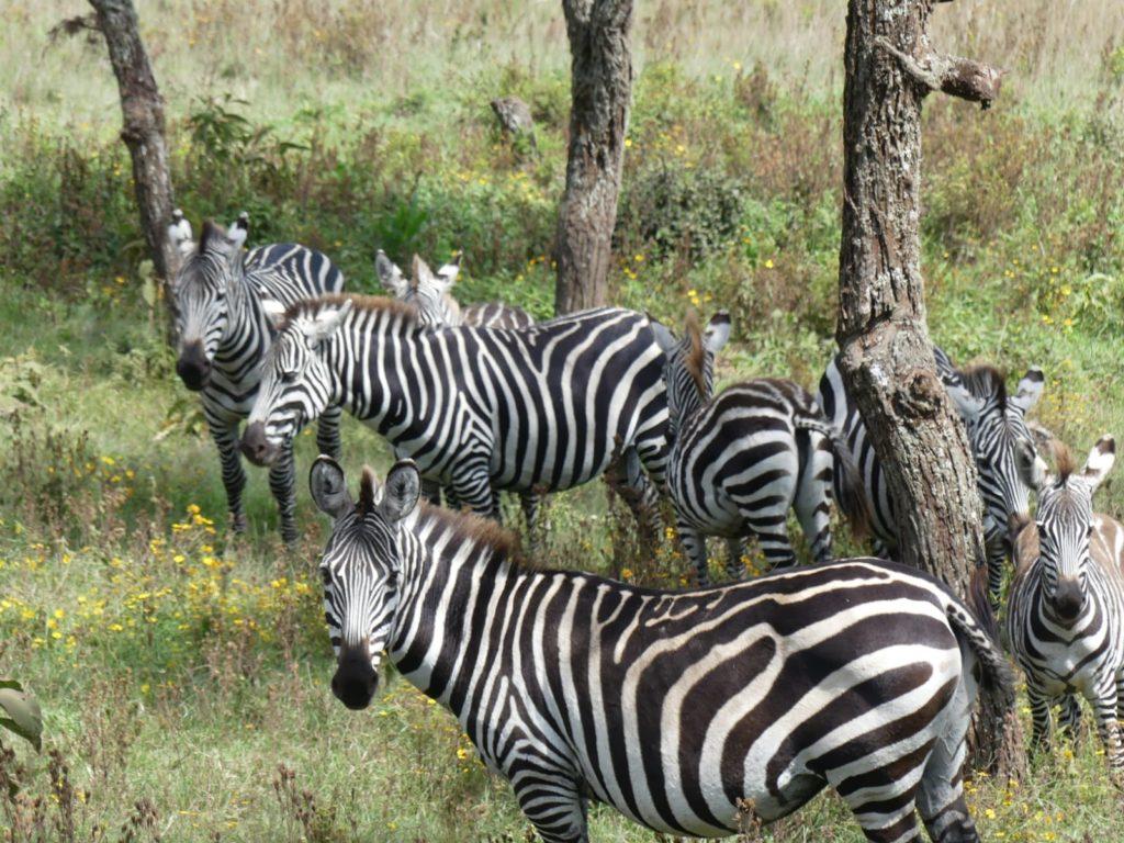 The Tarangire National Park
