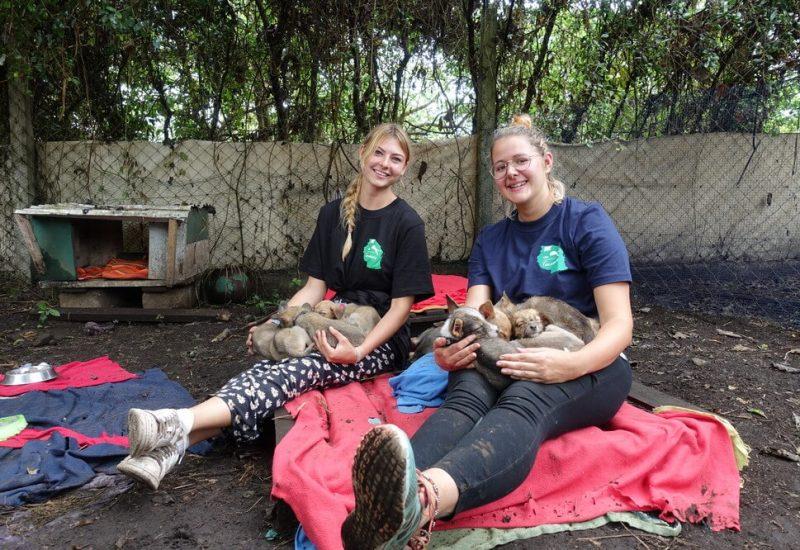 dog shelter Viva Tanzania