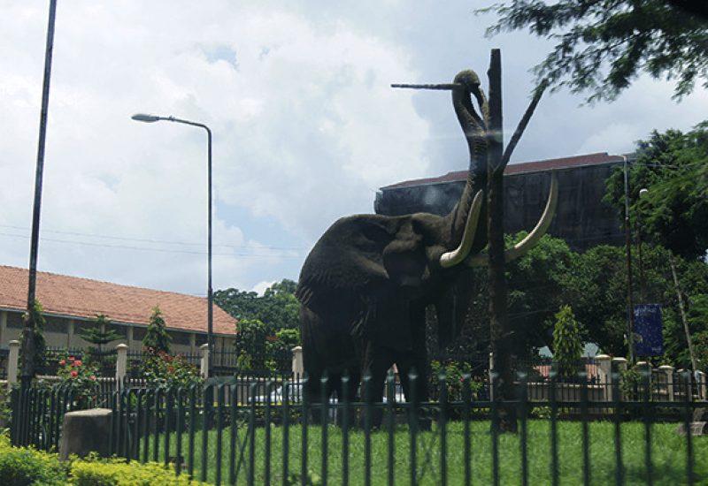 Arusha Tanzania elephant