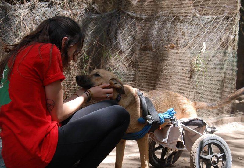 Mbwa Wa Africa animal volunteering Tanzania