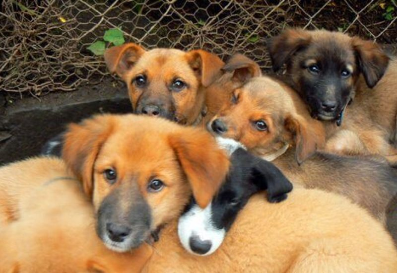 Mbwa Wa Africa volunteering dogs