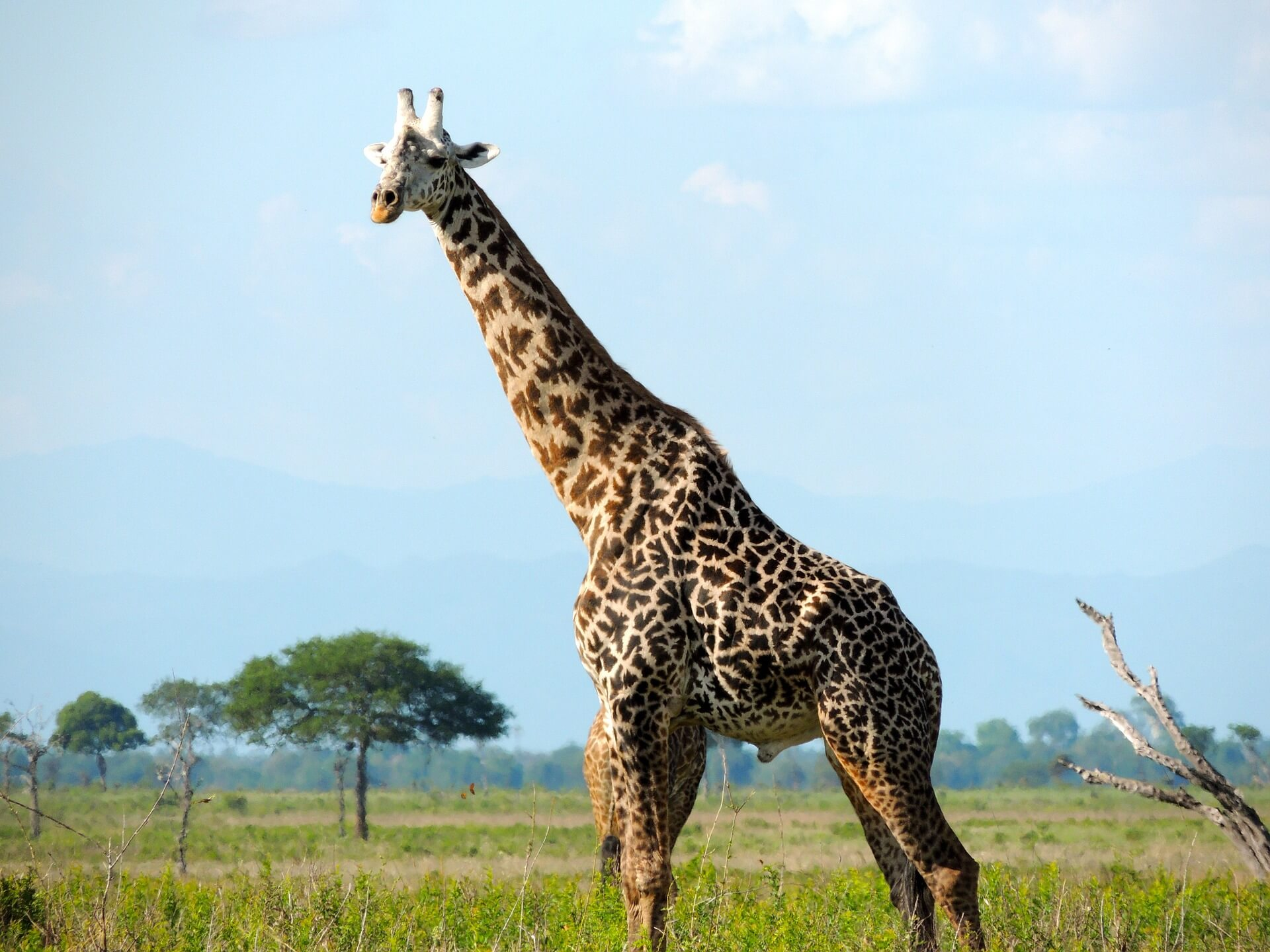 safari tour with Viva Tanzania
