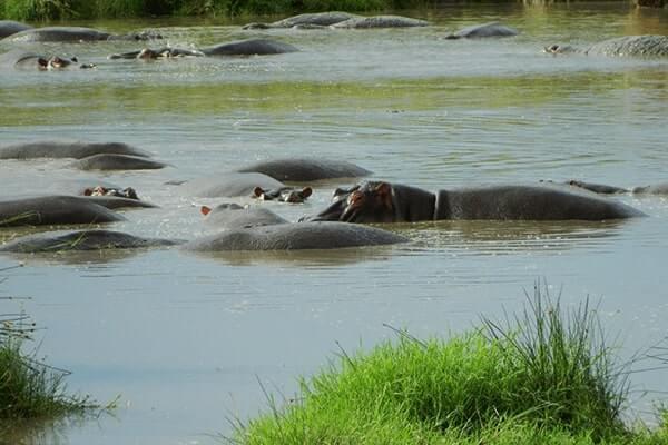 Viva Tanzania Safari